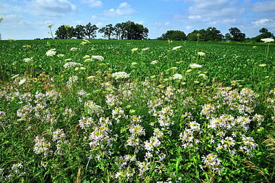 Photograph - Roadside Wildflowers In Mchenry County by Ray Mathis