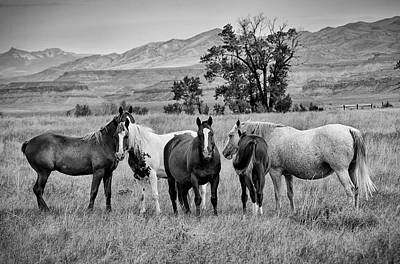 Photograph - Roaming Free by Bill Hosford