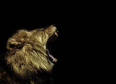 Animals Royalty-Free and Rights-Managed Images - Roar by Martin Newman