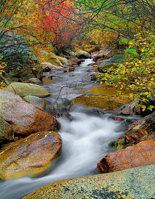 Rock Creek Art Print by Tim Reaves