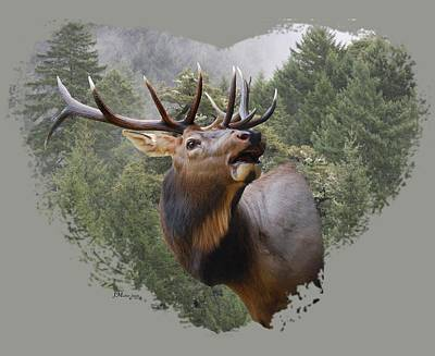 Photograph - Rocky Mountain Elk by Jennifer Muller