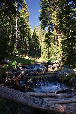 Forest Photograph - Rocky Mountain Summer by Michael J Bauer