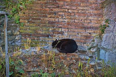 Photograph - Roman Cat Sanctuary by JAMART Photography