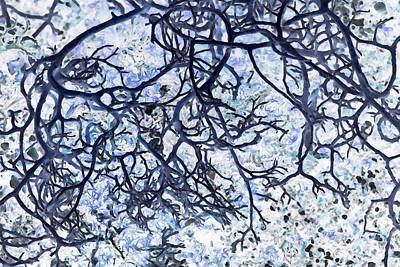 Tree Roots Painting - Roots by Edouard Coleman