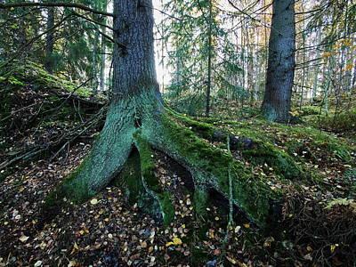 Photograph - Roots by Jouko Lehto
