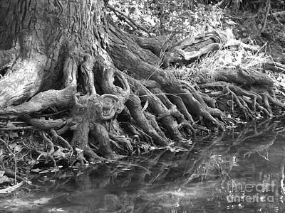 Photograph - Roots by Sara Raber
