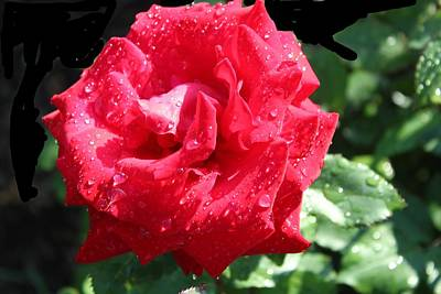 Photograph - Rose-3 by Anand Swaroop Manchiraju