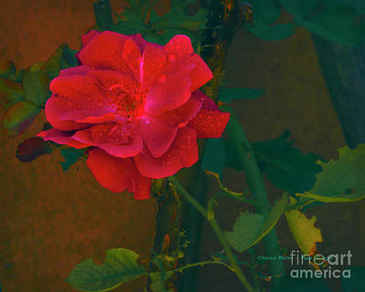 Mixed Media Royalty Free Images - Rose  Royalty-Free Image by Charles Muhle