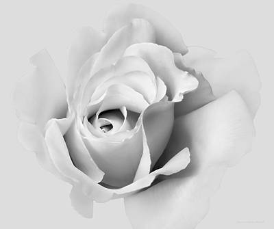 Photograph - Soft Gray Rose Flower by Jennie Marie Schell