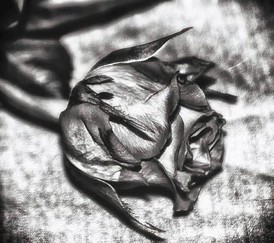 Stamen Digital Art - Rose by Frances Lewis