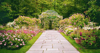 Photograph - Rose Garden Walkway by Jessica Jenney