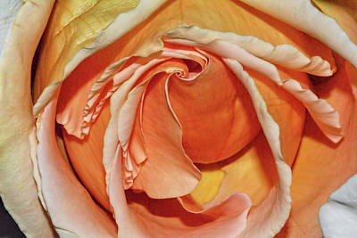 Photograph - Rose by Isam Awad