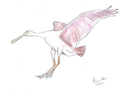 Spoonbill Mixed Media - Roseate Spoonbill by Ronnie Maum