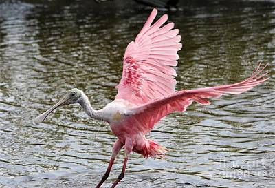 Photograph - Roseate Spoonbill Wings by Paulette Thomas