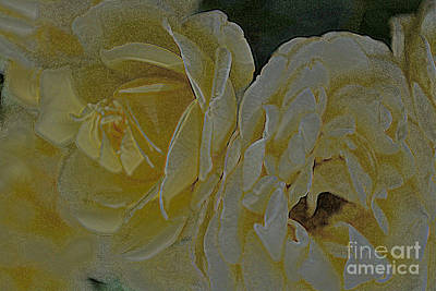 Photograph - Roses 8 by Diane montana Jansson