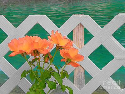 Photograph - Roses In Scottsdale by Lisa Dunn