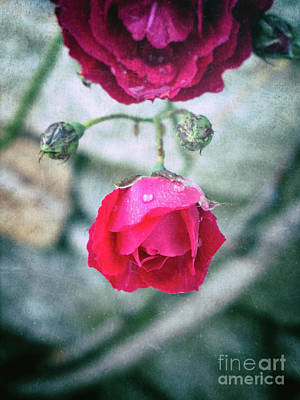 Photograph - Roses by Silvia Ganora