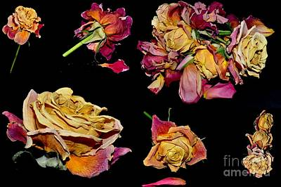 Photograph - Roses by Sylvie Leandre
