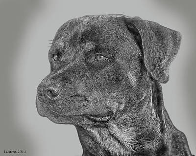 Pure Breed Digital Art - Rottweiler by Larry Linton