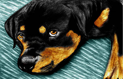 Rotty Art Print by Peter Piatt