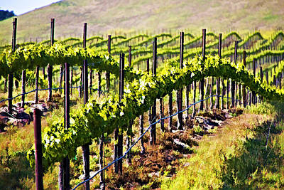 Rows Of Vines Art Print by Patricia Stalter