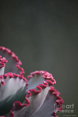 Photograph - Ruby Ruffle by Susan Herber