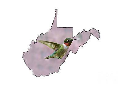 Photograph - Ruby-throated Hummingbird  Beautiful Coloring by Dan Friend
