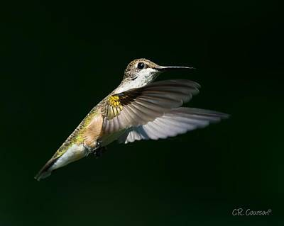Photograph - Ruby-throated Hummingbird by CR Courson