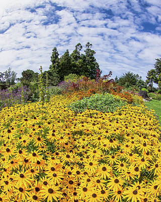 Photograph - Rudbeckia Vista by Jay Blackburn