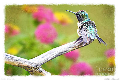 Photograph - Ruffled Hummingbird by Debbie Portwood