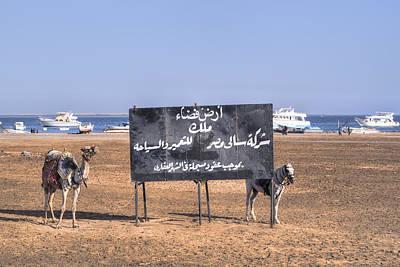 Camel Photograph - Safaga - Egypt by Joana Kruse