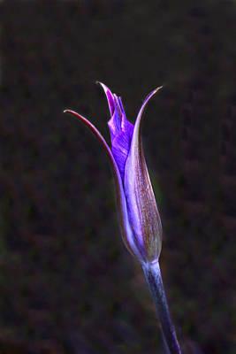 Landscape Photograph - Sagebrush Mariposa Lilly by Gary Wing