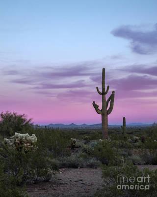 Photograph - Saguaro Cactus Sunset by Tamara Becker
