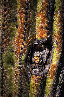 Photograph - Saguaro Detail No. 10 by Roger Passman
