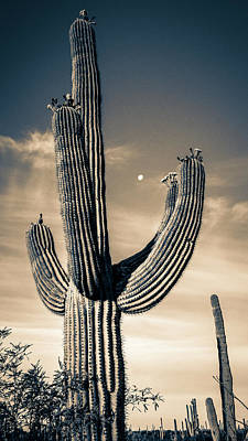 Photograph - Saguaro In Bloom by Sandra Selle Rodriguez