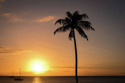 1-war Is Hell Royalty Free Images - A Palm Tree Sunset. Royalty-Free Image by Cory Huchkowski