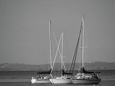 Photograph - Sailing In The Bay by Jenny Regan