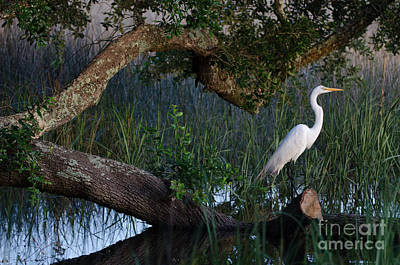 Salt Marsh Heron Art Print