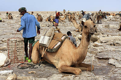 Photograph - Salt Miners Of The Danakil by Aidan Moran