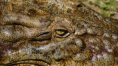 Photograph - Saltwater Crocodile Eye by Gary Crockett