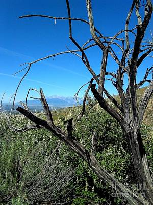 Photograph - San Bernardino California Mountain View by Michael Hoard
