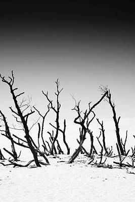 Sand Dune With Dead Trees Art Print by Chevy Fleet