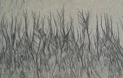 Photograph - Sand Reels by Joe  Palermo