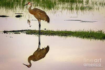 Photograph - Sandhill Crane by Les Greenwood