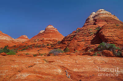 Photograph - Sandstone Formations Colorado Plateau Utah by Dave Welling