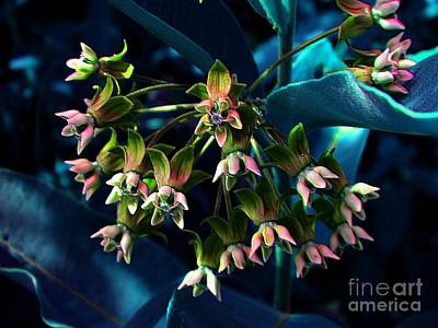 Photograph - Satin by Elfriede Fulda