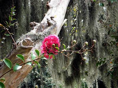 Savannah Original