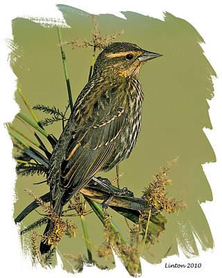 Sparrow Digital Art - Savannah Sparrow by Larry Linton