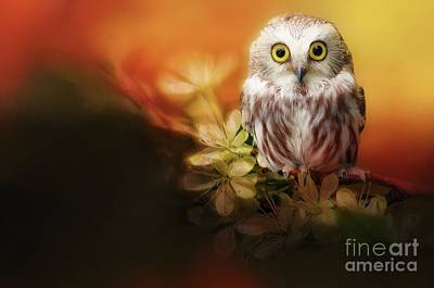 Digital Art - Saw-whet Owl by Suzanne Handel