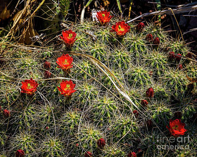 Photograph - Say It With Flowers by Jon Burch Photography
